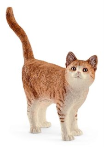 beeg těsný kočička