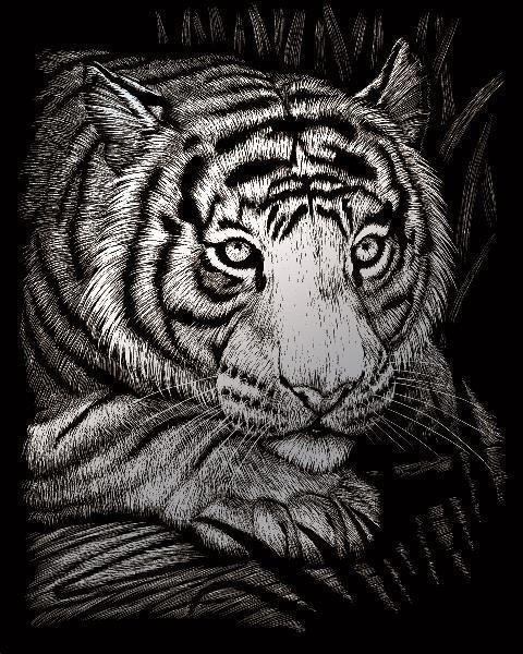 poškozený obal: Škrabací obrázek - Číhající tygr (stříbrný)