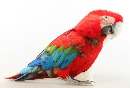 Tvarovaný polštářek Papoušek