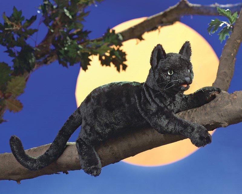 Zdarma veškerá černá kočička